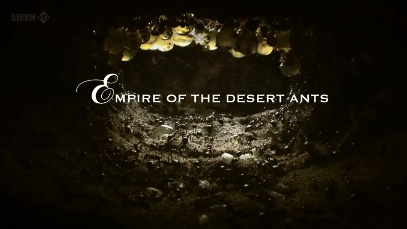BBC 沙漠的蚂蚁帝国 Empire of the Desert Ants